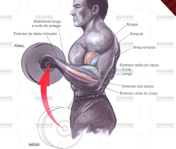 (imagem: www.malhandocerto.com)